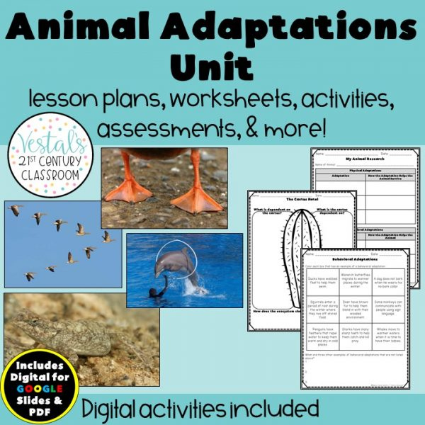 animal-adaptations-unit