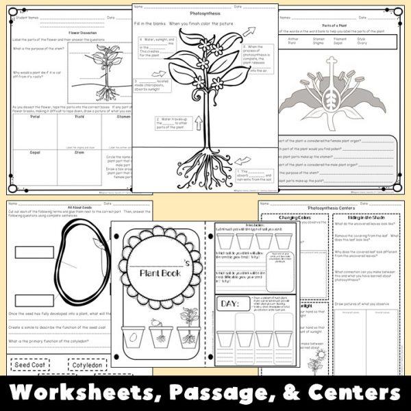plants-unit-3