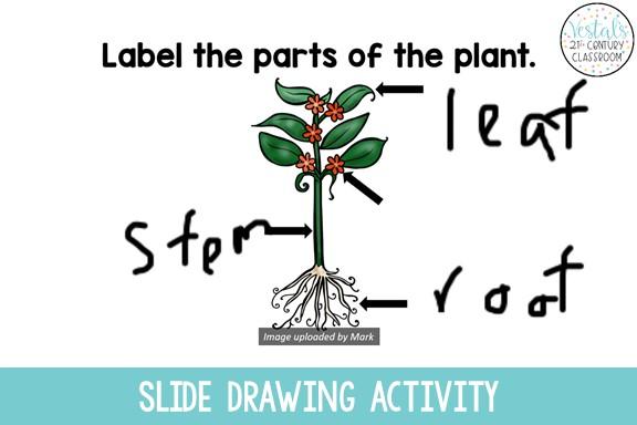 slide-drawing-classpoint-activity